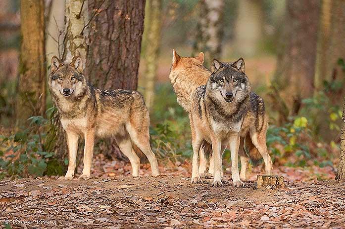 Wildtierpark Hanau